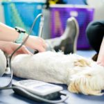 Laser-Therapy-on-Pets