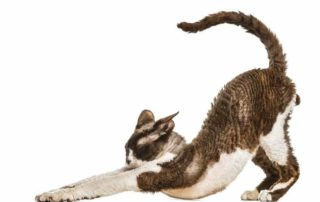 Cats and Stretching